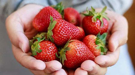 فواید داروئی توت فرنگی,خاصیت های توت فرنگی